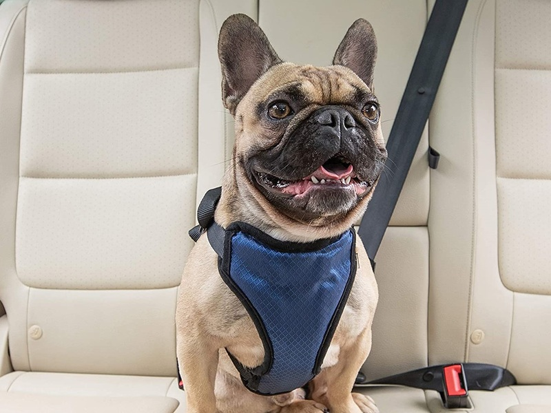These crash-tested dog car harnesses keep your copilots safe and comfortable.