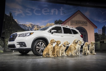 6 Best SUVs for Dog Owners